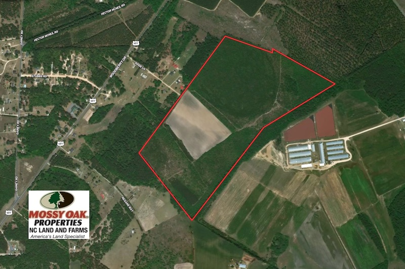 113 Acres of Timber and Farm Land For Sale in Hoke County NC!