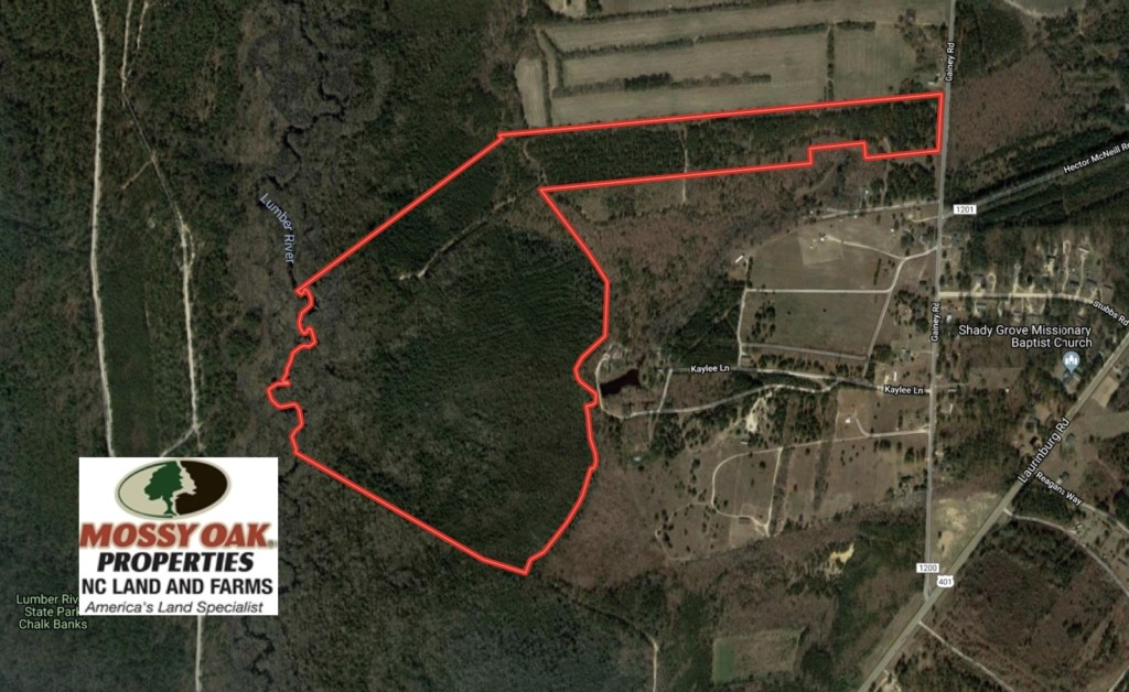 139 Acres of Timber and Hunting Land For Sale in Hoke County NC!