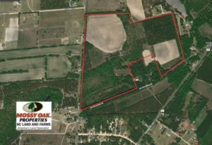 UNDER CONTRACT!  89 Acres of Timber and Farm Land For Sale in Hoke County NC!