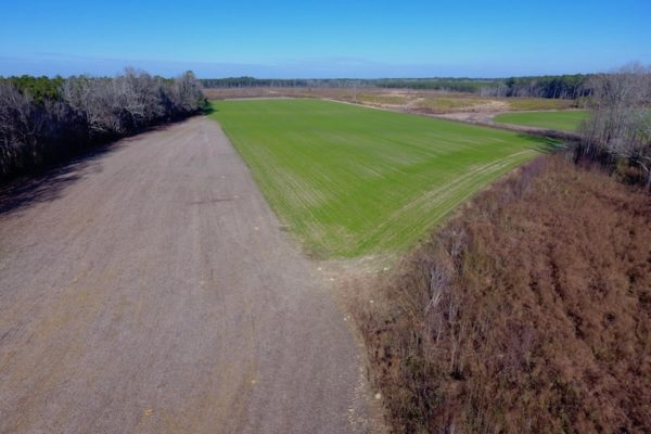 REDUCED!  312 Acres of Farm and Hunting Land For Sale in Edgecombe County NC!