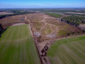 UNDER CONTRACT!  312 Acres of Farm and Hunting Land For Sale in Edgecombe County NC!