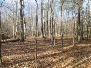 SOLD!  7.6  Acres of Residential Timber Land for Sale in VA Beach!