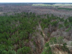 UNDER CONTRACT!  121 Acres of Hunting Land For Sale in Robeson County NC!