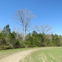 58 Acres of Farm and Timber Land For Sale in Robeson County NC!