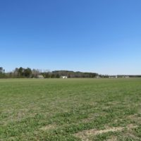 UNDER CONTRACT!  58 Acres of Farm and Timber Land For Sale in Robeson County NC!