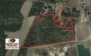 UNDER CONTRACT!  35 Acres of Hunting Land For Sale in Columbus County NC!