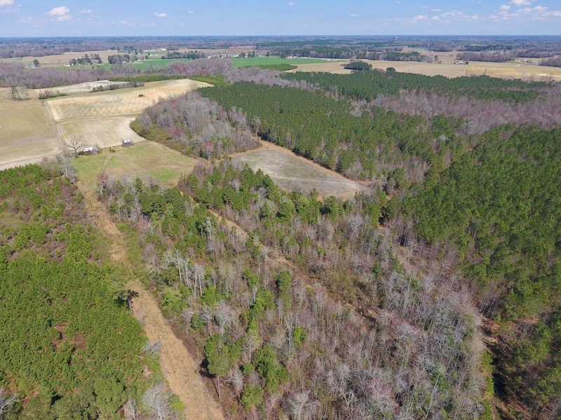 UNDER CONTRACT!  43 Acres of Farm and Timber Land For Sale in Wilson County NC!