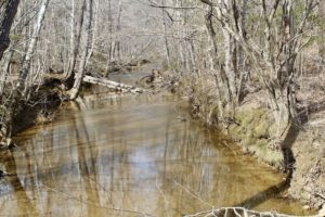 UNDER CONTRACT!  53.75 Acres of Hunting and Recreational Land For Sale in Lunenburg County VA!
