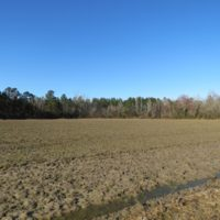 REDUCED!  47 Acres of Farm and Timber Land For Sale in Columbus County NC!