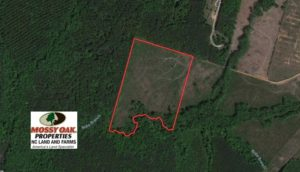 UNDER CONTRACT!  20.03 Acres of Hunting Land For Sale in Warren County NC!