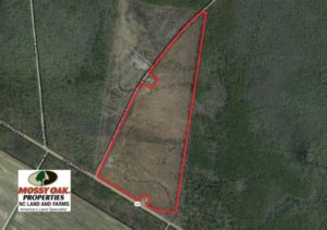 SOLD!   74.4 Acres of Hunting and Timber Land for Sale in Dare County NC!
