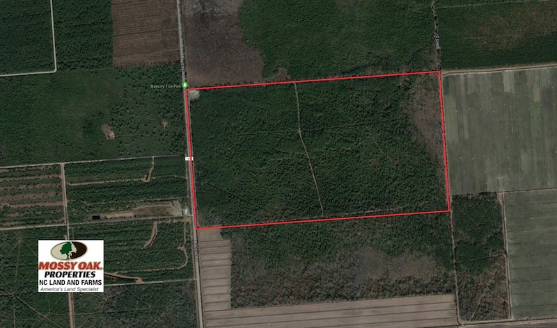 352 Acres of Timber and Recreational Land For Sale in Pamlico County NC!