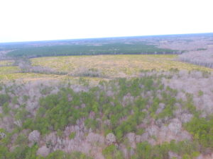 SOLD!!  55 Acres of Hunting and Timber Land with Home Site in Surry County VA!