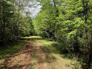 SOLD!  26.5 Acres of Recreational or Development Land For Sale in Chatham County NC!