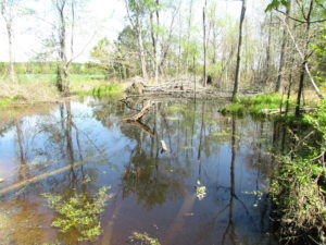 UNDER CONTRACT!  22 Acres of Residential and Recreational Land For Sale in Suffolk VA!