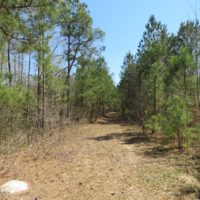 REDUCED!  77 Acres of Hunting Land For Sale in Scotland County NC!