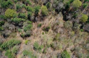 UNDER CONTRACT!  6 Acres of Hunting and Recreational Land with Cabin For Sale in Amherst County VA!