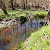 111 Acres of Hunting and Timberland For Sale in Craven County NC!