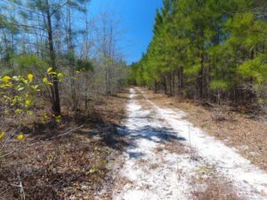 UNDER CONTRACT!  30 Acres of Hunting and Timberland For Sale in Bladen County NC!
