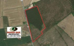 UNDER CONTRACT!  16.6 Acres of Hunting and Timber Land for Sale in Gates County NC!