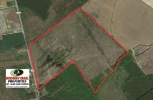 UNDER CONTRACT!  39 Acres of Hunting and Timber Land for Sale in Gates County NC!