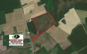UNDER CONTRACT!  33.8 Acres of Hunting and Timber Land For Sale in Gates County NC!
