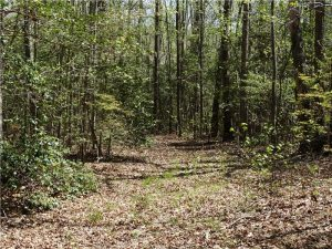 SOLD!!  34 Acres of Recreational Land For Sale in Essex County VA!