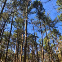 UNDER CONTRACT!  12.65 Acres of Residential Timber Land For Sale In Granville County NC!