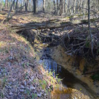 12.65 Acres of Residential Timber Land For Sale In Granville County NC!