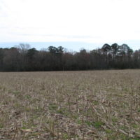 REDUCED!  24 Acres of Farm and Timber Land For Sale in Isle of Wight County VA!