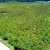 SOLD!  50 Acres of Hunting Land For Sale In Pamlico County NC!
