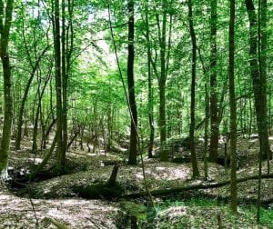 UNDER CONTRACT!  7 Acres of Timber Land in For Sale in Vance County NC!