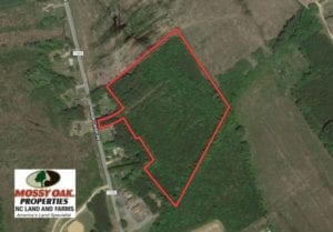 UNDER CONTRACT!  14 acres of Hunting and Timber Land for Sale in Gates County NC!