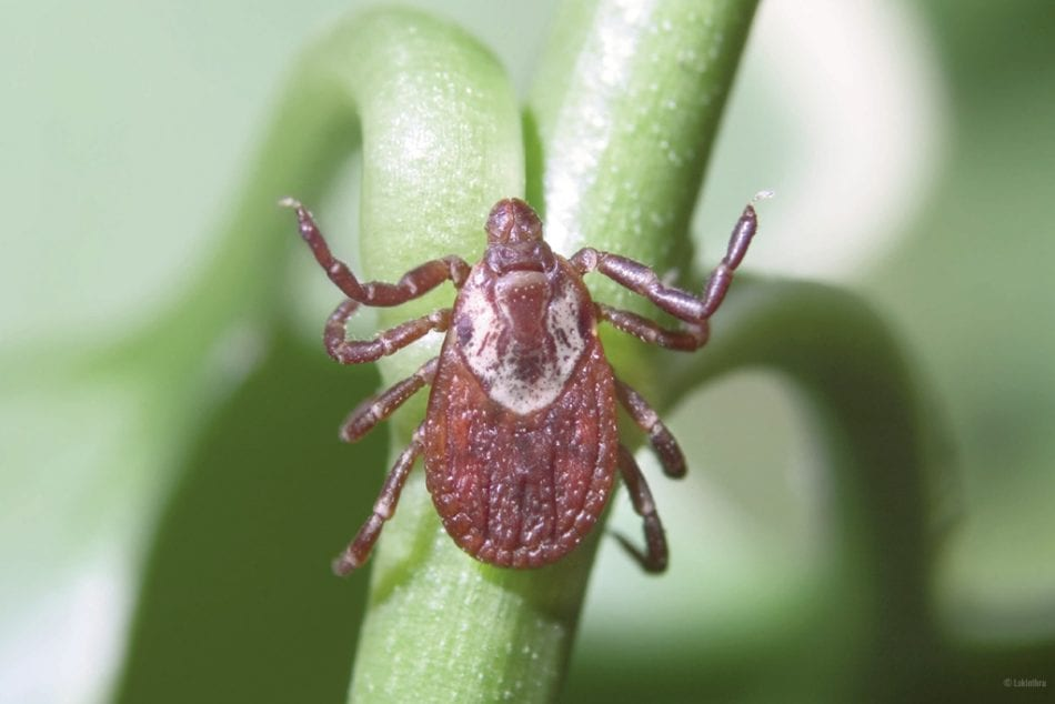 4 EASY WAYS TO AVOID TICKS