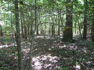 UNDER CONTRACT!  13.3 Acres of Farm Timber and Hunting Land For Sale in Sussex County VA!