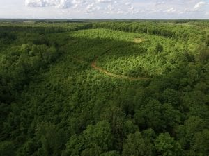 SOLD!! 83 Acres of Hunting and Recreational Land For Sale in Lunenburg County VA!