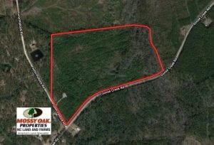 UNDER CONTRACT!  50 Acres of Hunting Land For Sale In Pamlico County NC!