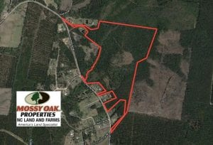 UNDER CONTRACT!  81 Acres of Hunting and Timber Land For Sale in Brunswick County NC!