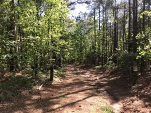 UNDER CONTRACT!  340 Acres of Hunting and Timber Land For Sale in Richmond County NC!