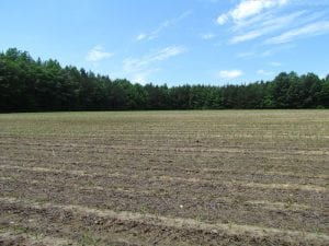SOLD!  276 Acres of Farm and Hunting Land For Sale in Prince George County VA!