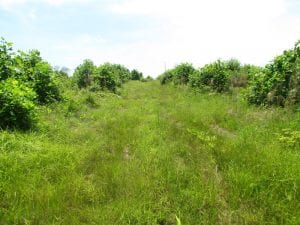 UNDER CONTRACT!  170 Acres of Farm and Hunting Land with Pond For Sale in Prince George County VA!