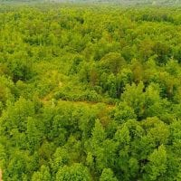 55 Acres of Residential and Recreational Land For Sale in Chatham County NC!