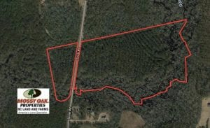 UNDER CONTRACT!  59 Acres of Hunting and Timber Land for Sale in Pender County NC!