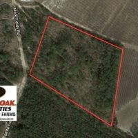 UNDER CONTRACT!  10.5 Acres of Hunting and Timberland For Sale in Bladen County NC!