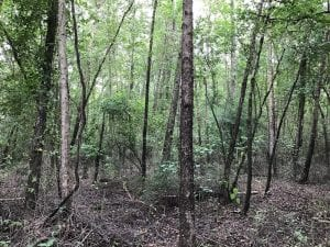 SOLD!  12.17 Acres of Timber and Hunting Land for Sale in Sampson County NC!