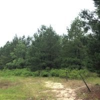 UNDER CONTRACT!  41.34 Acres of Hunting Land For Sale in Robeson County NC!