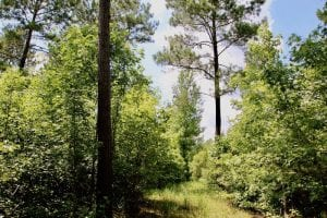 UNDER CONTRACT!!  81.5 Acres of Waterfront Property For Sale in Blount's Creek Beaufort County NC!