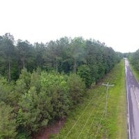 59 Acres of Hunting and Timber Land for Sale in Pender County NC!