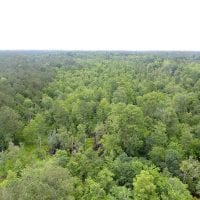 SOLD!  59 Acres of Hunting and Timber Land for Sale in Pender County NC!