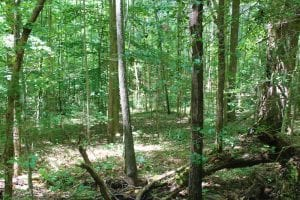 UNDER CONTRACT!!  11.83 Acres of Residential and Hunting Land For Sale in Amelia County VA!